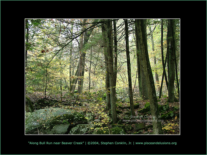 Along Bull Run near Lewisberry, PA, by Stephen Conklin, Jr. - www.pisceandelusions.org
