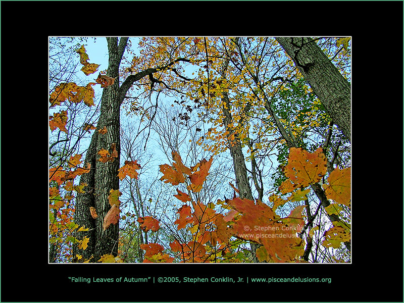 Falling Leaves of Autumn, by Stephen Conklin, Jr. - www.pisceandelusions.org