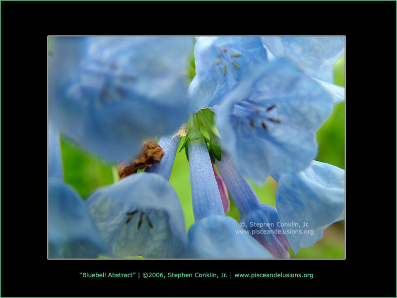 Bluebell Abstract, by Stephen Conklin, Jr. - www.pisceandelusions.org