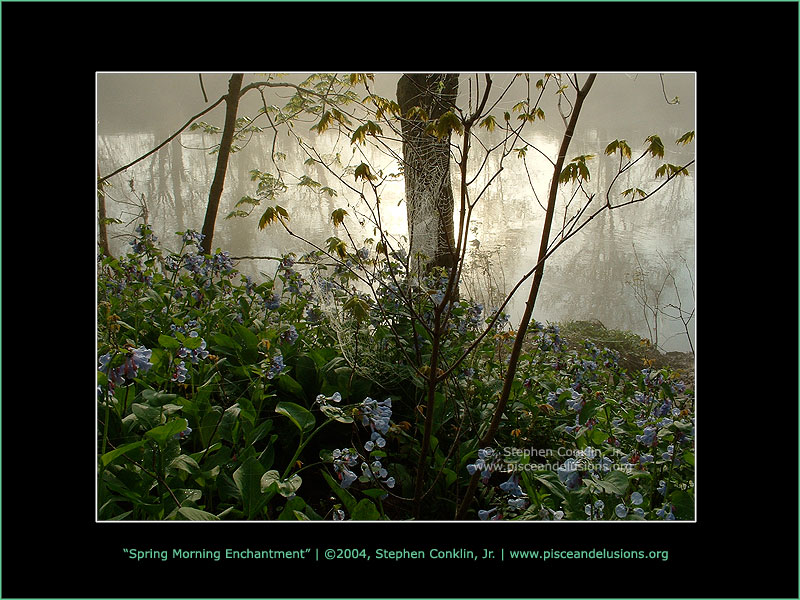 Spring Morning Enchantment, by Stephen Conklin, Jr. - www.pisceandelusions.org